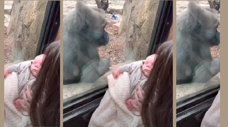 Уникална среща на две майки разчувства света. Защо? Вижте видеото!