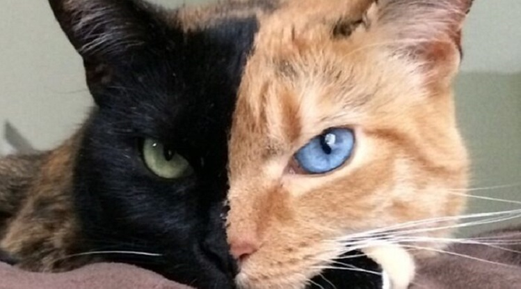 Котката с две лица, която стана хит в Инстаграм
